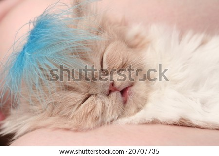 The small nice fluffy kitten sleeps on a sofa