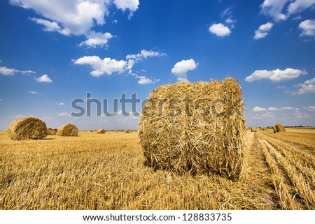 the straw combined nearby from each other a stack after the harvest company - stock photo