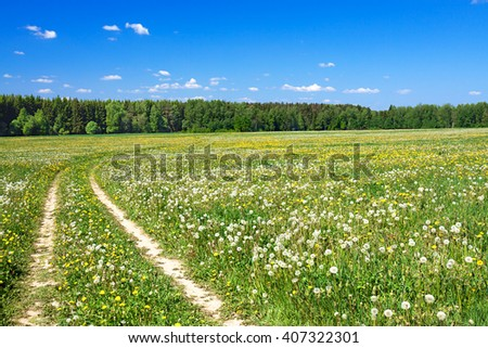 the summer landscape with the field and  blue sky - stock photo