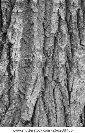 the surface of natural wood, background, texture