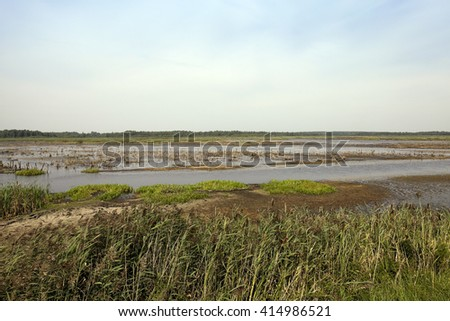the territory on which there is a swamp, the summer season of the year end, Belarus - stock photo