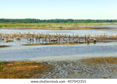 the territory on which there is a swamp, the summer season of the year end, Belarus, Defocus - stock photo