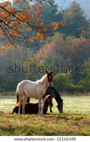 Three horses on a fall day with a mist in the air and a soft focus filter used to enhance the mood. - stock photo