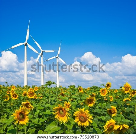 three wind turbines in a sunflower field