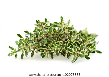 thyme branch isolated on white