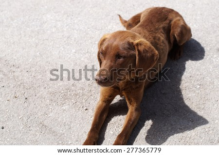 Tired dog lie in a street, close up                            - stock photo
