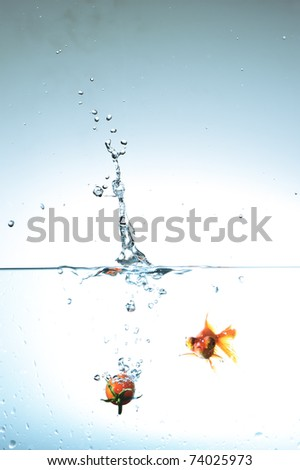 Tomato fall and goldenfish  in water
