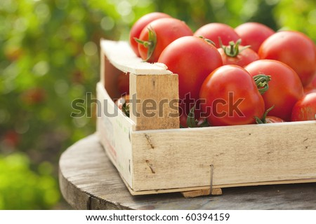 tomatoes in a box - stock photo
