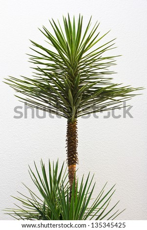 tree against a white wall - stock photo