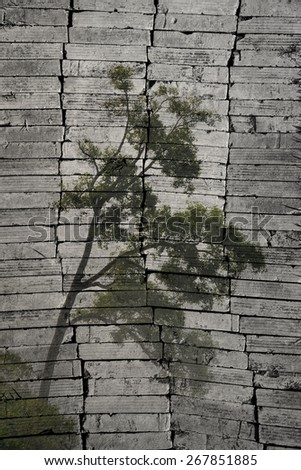 """""""tree and mist"""" The brick painting concept. - stock photo"""