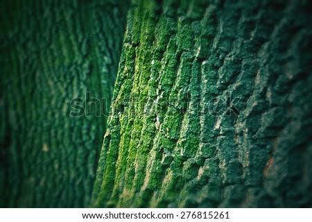 tree bark texture with green moss - stock photo