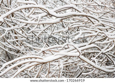 tree brunches covered in snow. Nature composition. - stock photo