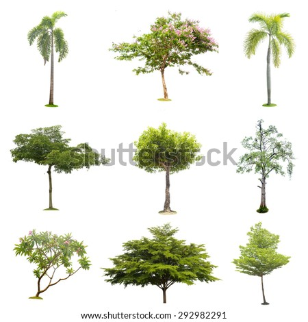 9 tree colection isolated , element for design garden and decoration, - stock photo