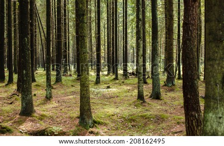Tree Forest - stock photo