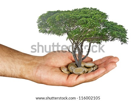 tree growng from pile of coins - stock photo