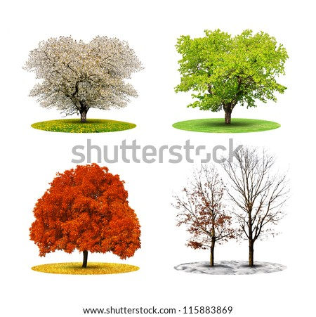 tree in four season isolated on white backgroud - stock photo