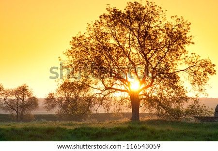 tree in golden sunset - stock photo