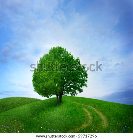 tree in green meadow - stock photo