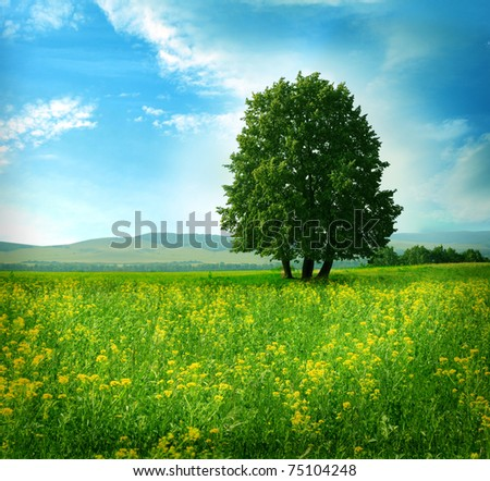 tree on the field - stock photo