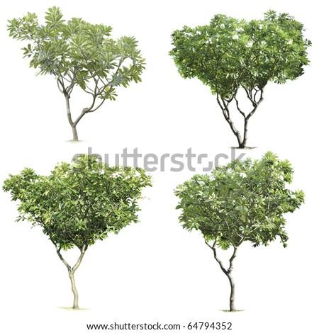 4 tree on white background - stock photo