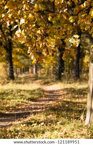 trees growing about the road to an autumn season. focus on the foreground - stock photo