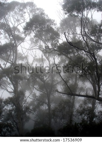 Trees silhouettes - stock photo