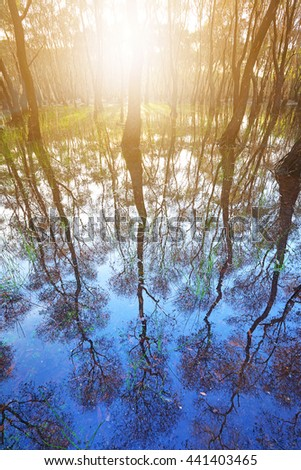 trees with beautiful water reflection in forestry - stock photo