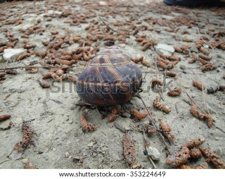 Tropical background with seashell on land