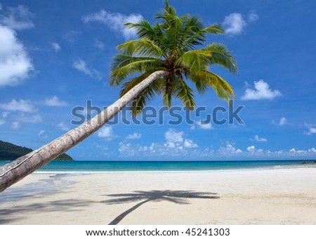 Tropical beach with a beautiful palm tree
