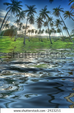 Tropical palm trees in the late afternoon sun - reflection in the water - stock photo