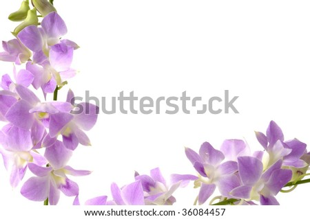 tropical plant in pink or violet orchid frame