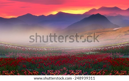 turning into a very beautiful time of year, when they begin to blossom on the background of bright colors in sunrises and sunsets. Manufacturers calendars, artists, photographers appreciate this time - stock photo