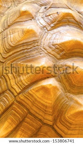 Turtle shell background                               - stock photo