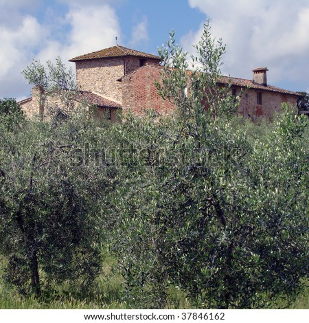 Tuscan farm  immerse in olive tree plantation - stock photo