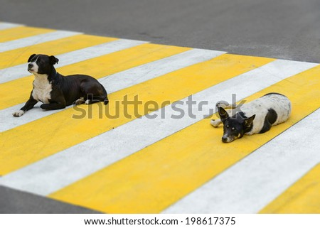 Two dogs lie on a pedestrian crossing - stock photo