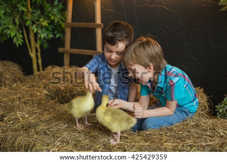 Two little boys try to feed a goslings in a farm - stock photo