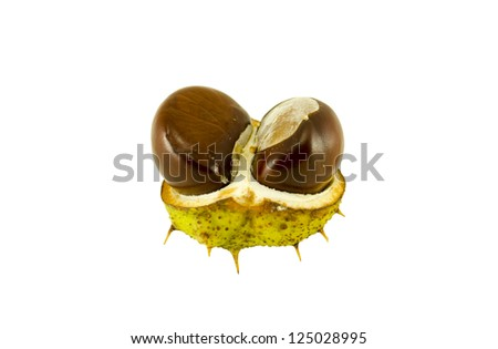 two ripe chestnuts in the shell isolated on white background. - stock photo