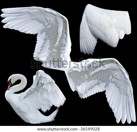 two wings isolated - stock photo