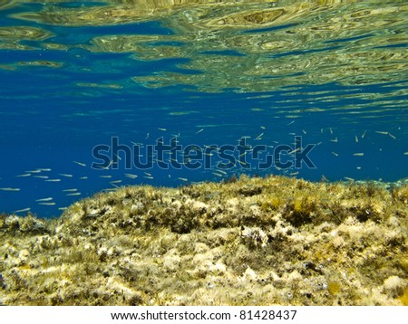 Under water landscape with little fish on the background, - stock photo