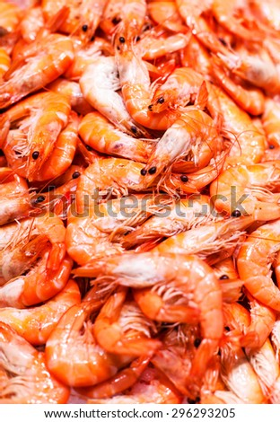 Unshelled tiger shrimps as gourmet seafood macro. Group of Shrimp cocktail background over white Ice close up.