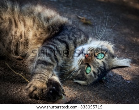 ?ute cat luxuriates in the sunlight, playing with dry leaf - stock photo