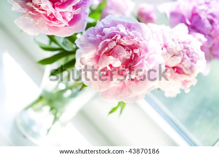 Vase of peony blooms in window