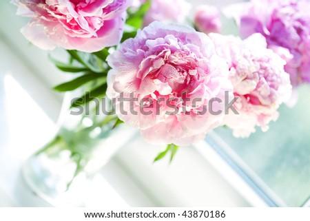 Vase of peony blooms in window - stock photo