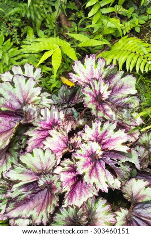 vibrant green spice plant with purple and green leaves highlighted by colorful ferns.G - stock photo