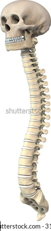 3/4 view of 3d skull and spine - stock photo