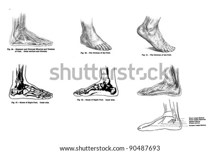 foot diagram stock images  royalty