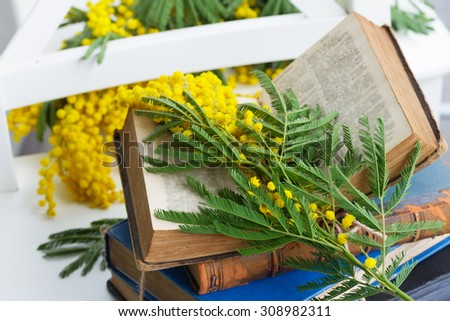 vintage old open book  with mimosa flowers - stock photo