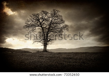 vintage old picture with alone tree - stock photo