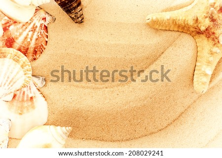 vintage summer background.closeup shell on sandy beach  with place for your text and instagram effect