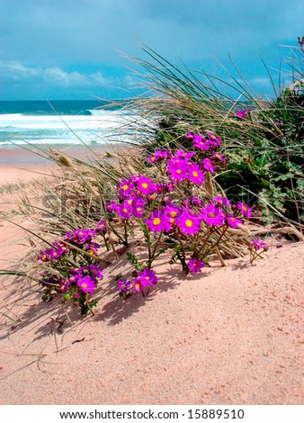 Violet flower in sand - stock photo